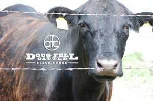 DF Cattle (Cattle Business)